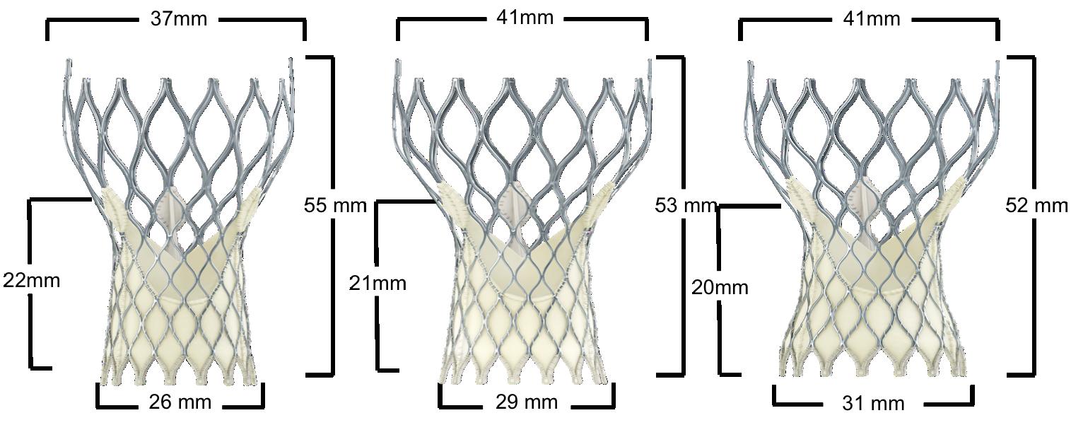 Figure 10. Medtronic CoreValve Transcatheter Aortic Valve Dimensions